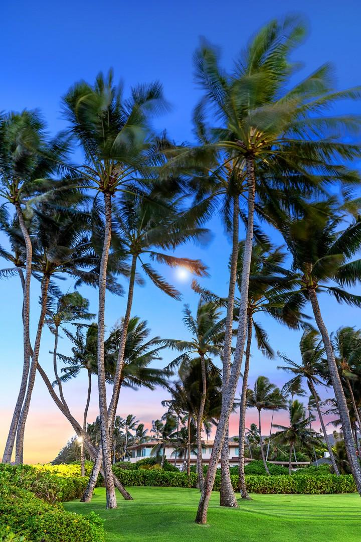 Twilight Palm Trees