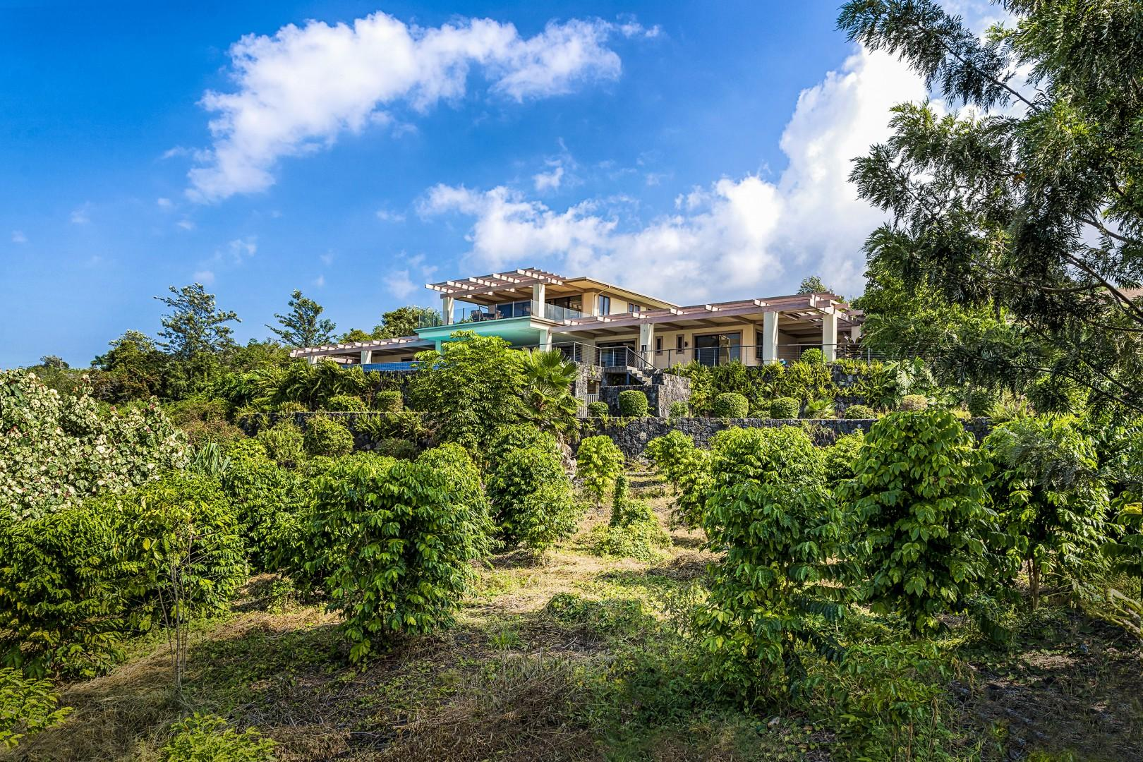 This home sits on a 3 acre parcel, full of Coffee