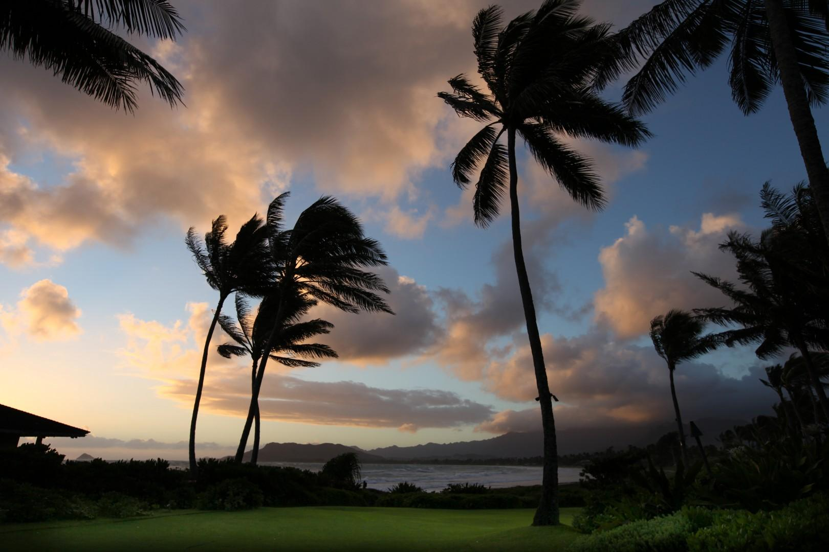 Trees swaying overlooking Kailua Beach