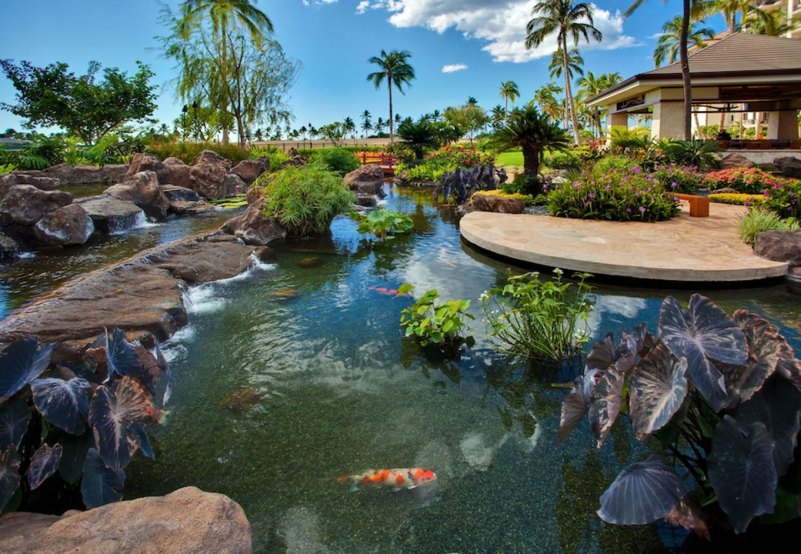 The serene Koi Ponds on the ground of the Beach Villas
