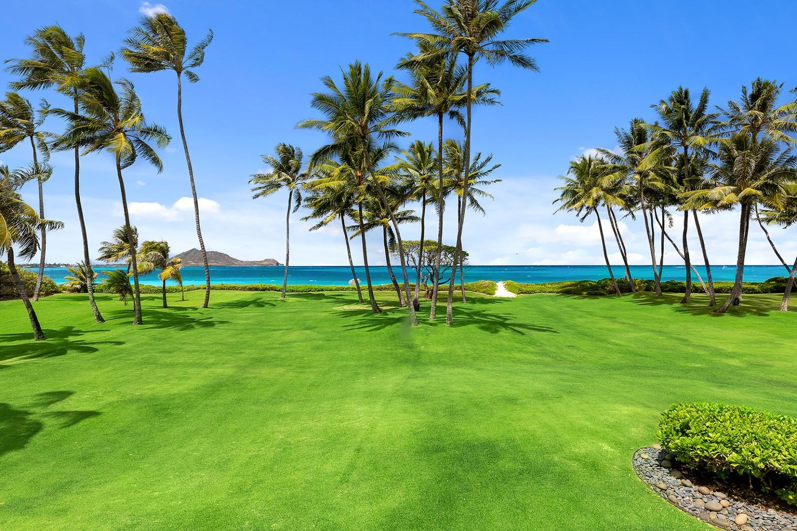 Manicured Tropical Beach Lawn