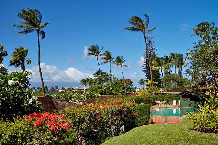 International Colony Club (West Maui)