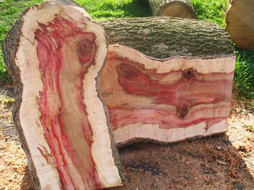 Pine Large as well How To Spalt Wood as well salanwoodbine likewise Search as well 539235755372970611. on spalted oak