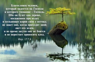 1441983735_derevo-na-kamne.jpg
