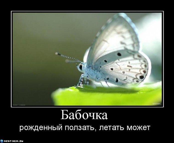 22d32a26e6be487605865a7f.jpg - Бабочка-рожденный-ползать-летать-может-695x572