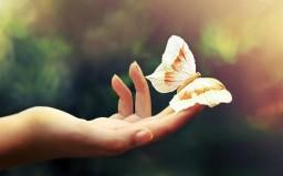 прикосновение-рука-бабочка.jpg