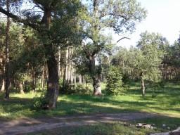 Мой лес 07.07.2018