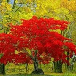 ИНДИВИДУАЛЬНОСТЬ осень дерево.png