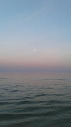 orca-image--110625227.jpeg