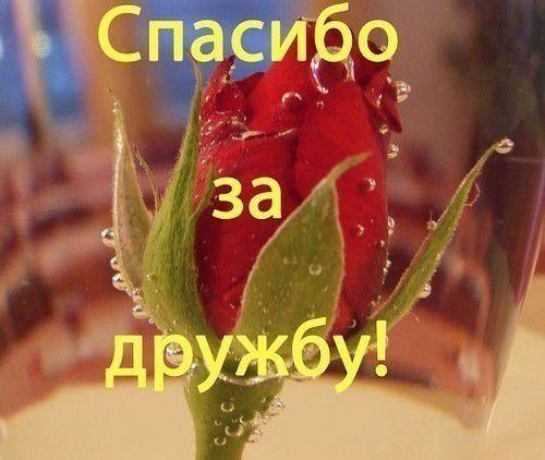 edff719f9125dedfb4a76c51.jpg - Spasibo_za_druzbu![1]