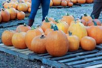 CPFUMC Pumpkin Patch 2019