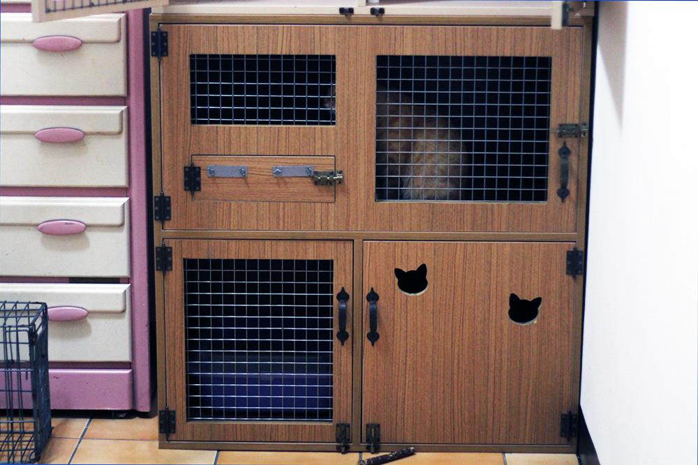 剛入住的貓咪需要觀察是否受感染,需安置在小隔間內。