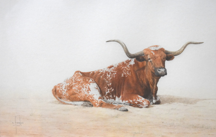 """Longhorn At Rest"""