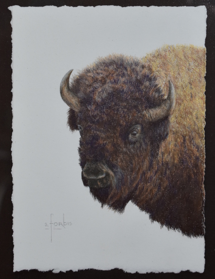 """Great Plains Heritage"" Buffalo / Bison"