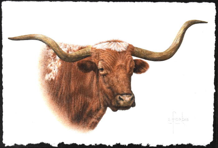 """Trail Head Lead"" Longhorn"