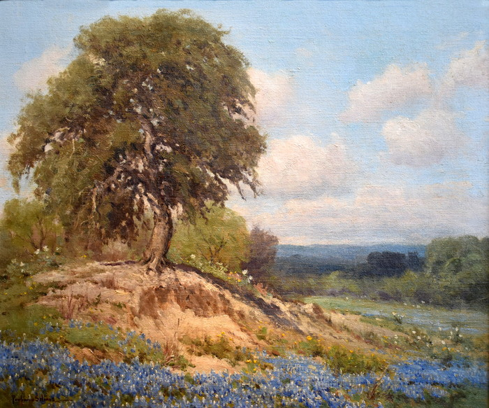 """King of the Hill""  Texas Bluebonnets in the Hill Country"