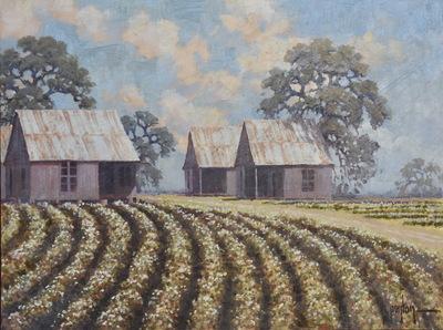 Cotton_field1