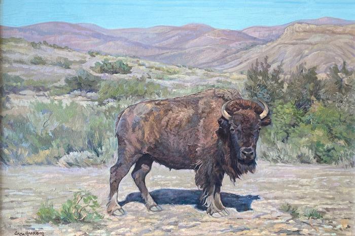 """""""West Texas Bison""""  Buffalo"""