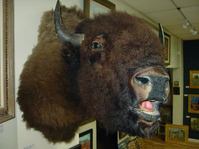 Buffalof