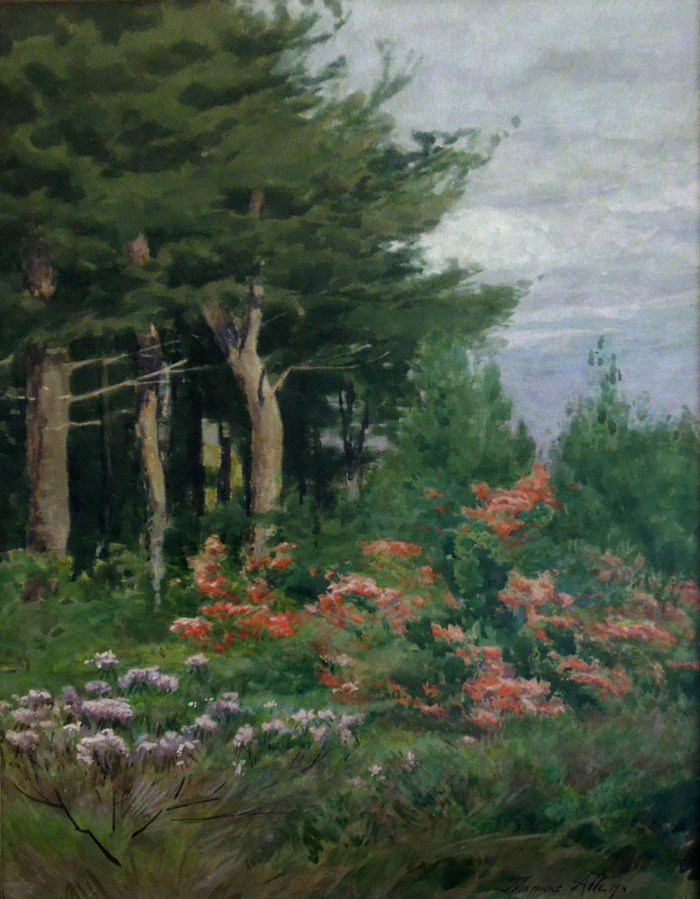 Cedars and Mountain Laurels