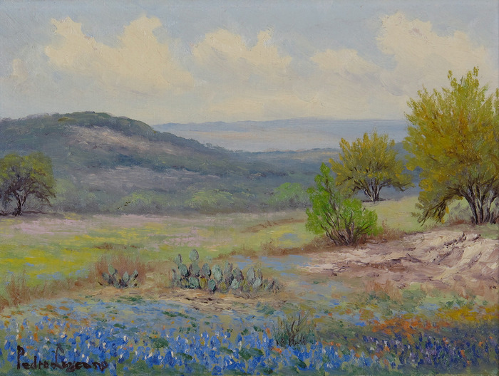 Huisache and Bluebonnets