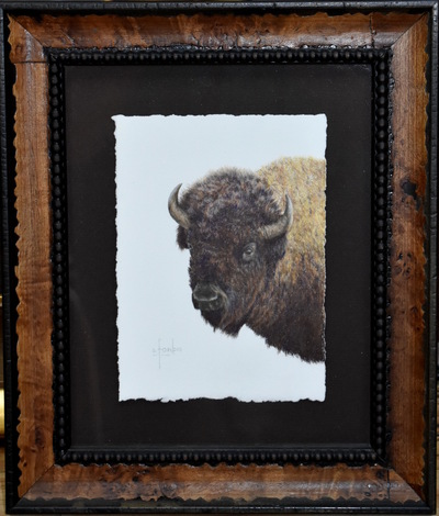 Buffaloshouldermount4