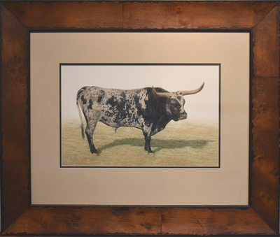 Longhornblackside1