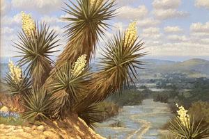 Yucca1