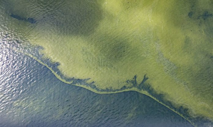 Heating Up The Microbial Soup: Warm Oceans May Benefit Cyanobacteria