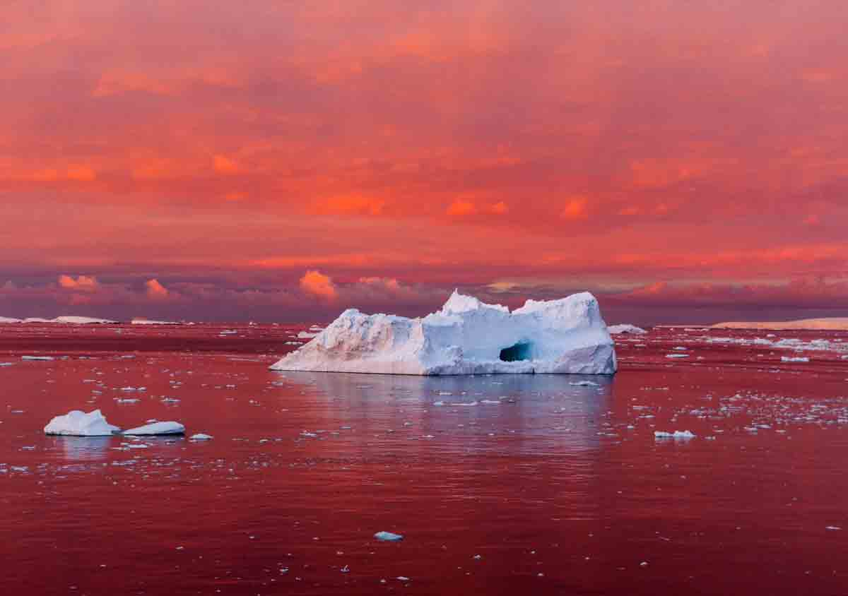 Image result for red snow in antarctica