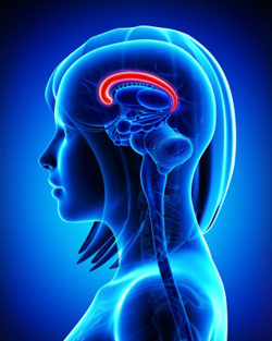 Southern California Brain Injury Lawyers