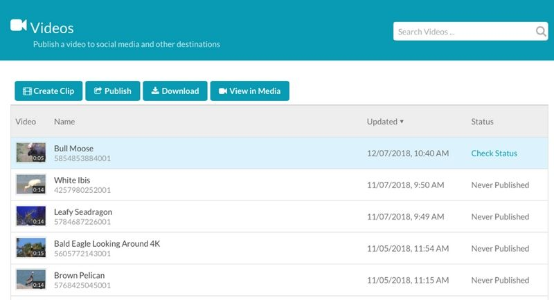 product screenshot showing Brightcove's dashboard