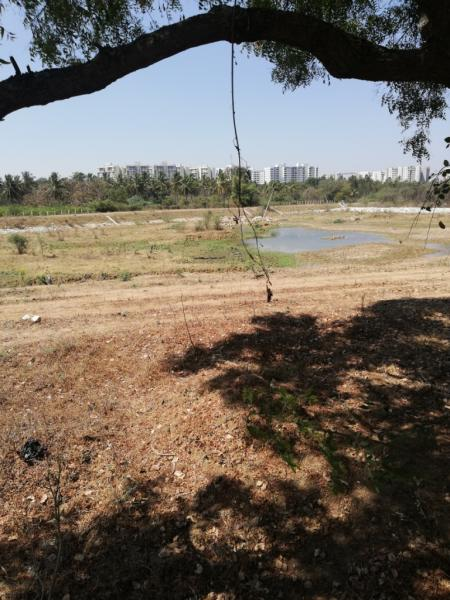 The revival of 19 lakes is a promise: BBMP 1