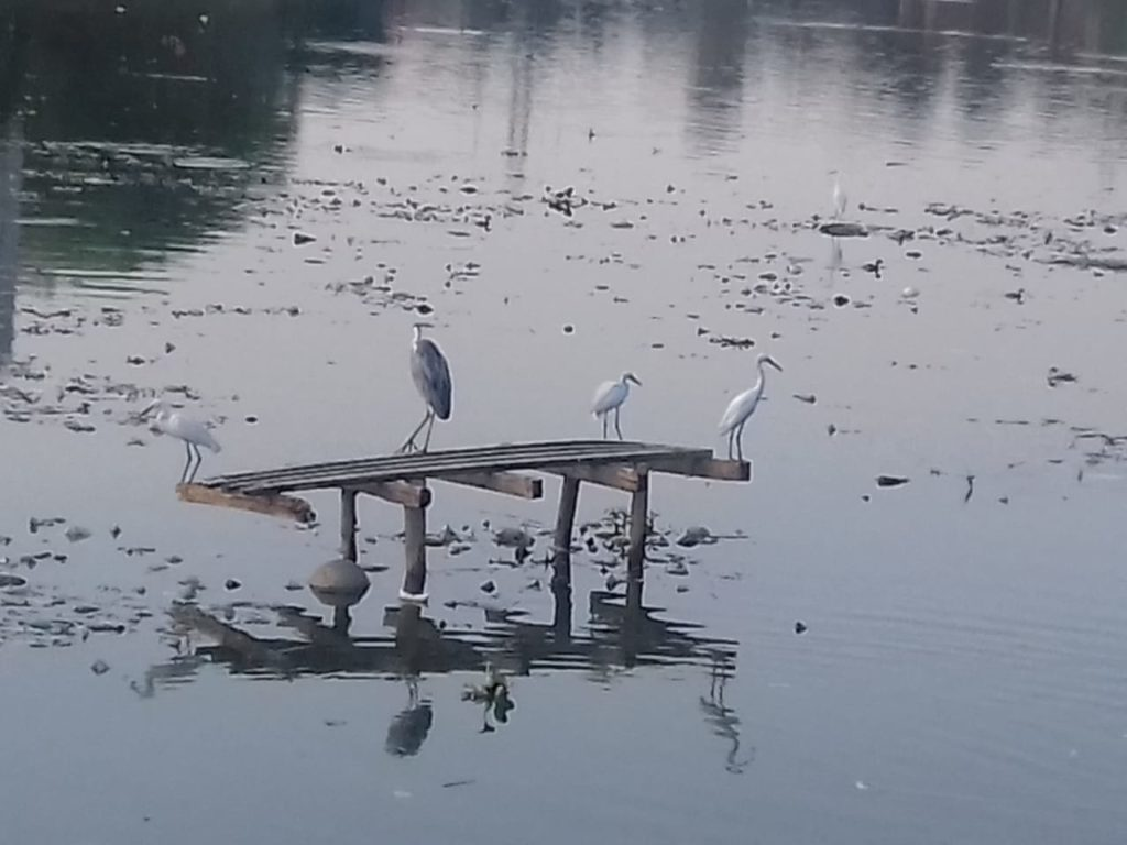 Avian Architect in Demand: Increased Bird Sighting in Bangalore Lakes, Thanks to our Bird Perch Man 2