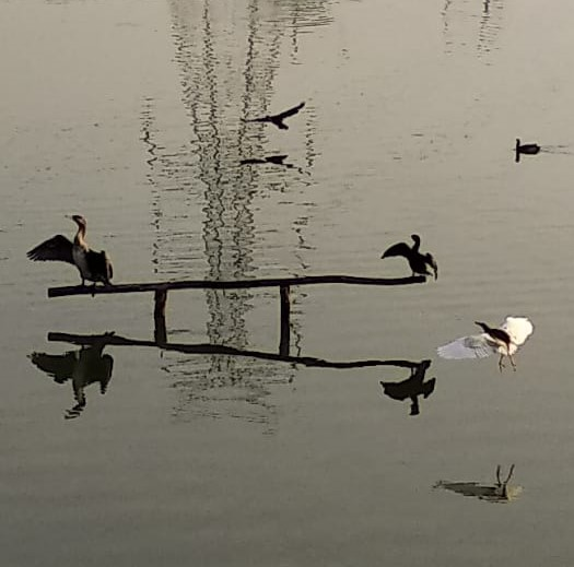 Avian Architect in Demand: Increased Bird Sighting in Bangalore Lakes, Thanks to our Bird Perch Man 4