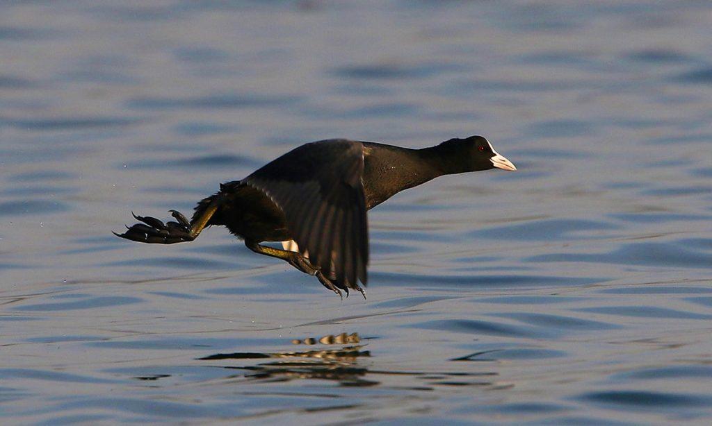 Bangalore Lakes Linked Beyond a Common Lake Basin: Above Ground, via Avian Visitors 3