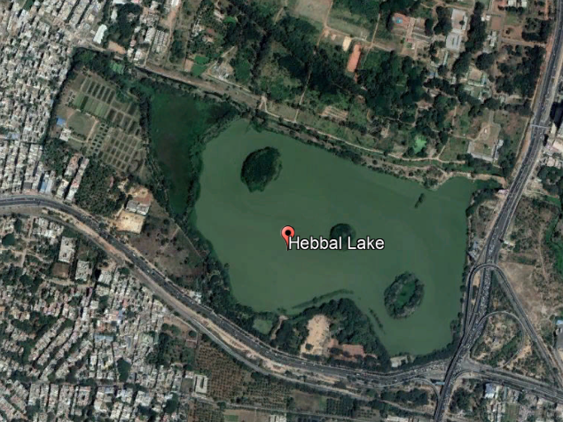 Playing Inclusive: Bengaluru Lake Islands Accommodate All Avian Life with the Right Gentle Slope Margin 2