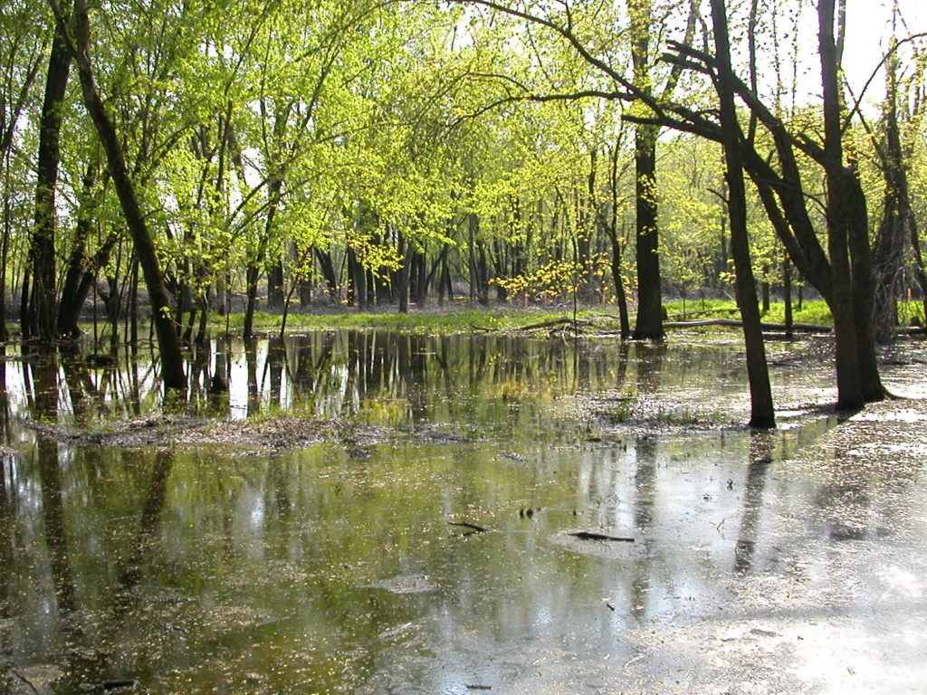 Understanding the Subtle Difference between a Lake and a Wetland 2