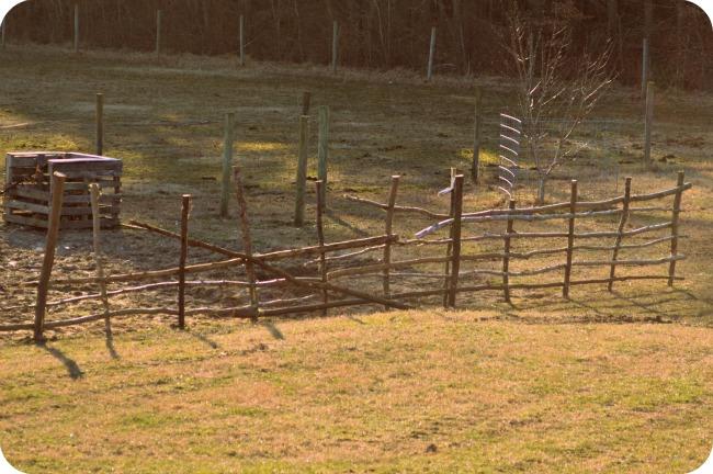 garden fences 6