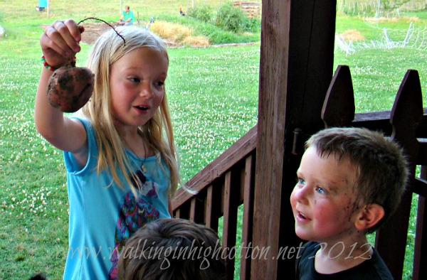 Tips for Family Gardening @ Walking in High Cotton