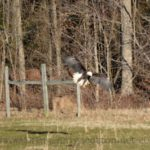 They Will Soar–Backyard Wildlife Adventures