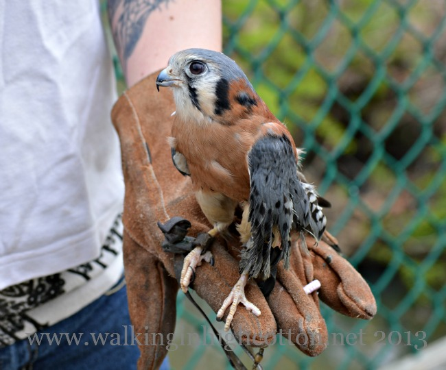 We got up close with a Peregrine Falcon, a Corn Snake, and a Horseshoe Crab this time.
