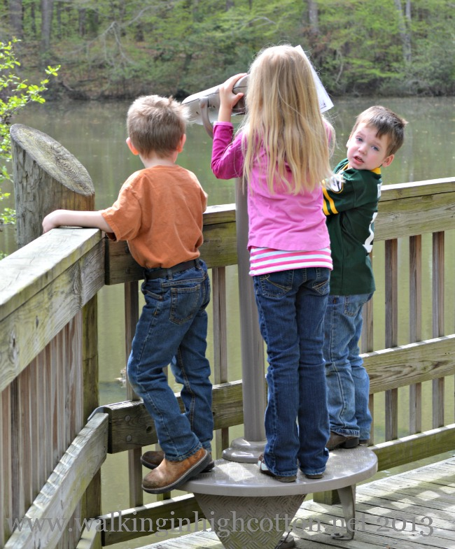The boardwalk has kid-friendly telescopes along the way for visitors to check out!
