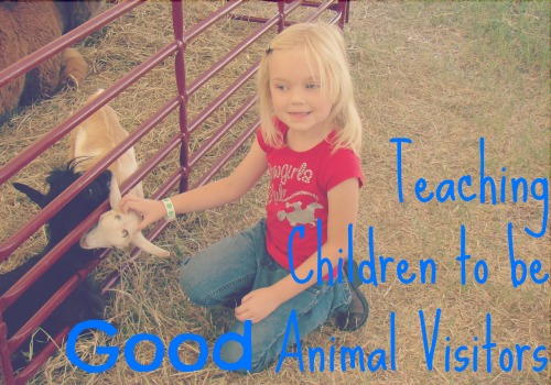 Tips for Teaching Children to be GOOD animal visitors at The Lowe Farm {via www.walkinginhighcotton.net}