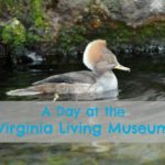 Spring at the Virginia Living Museum
