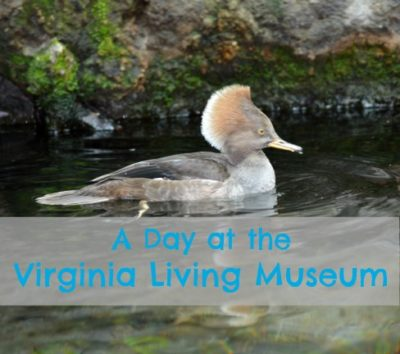 Planning a day at the Virginia Living Museum in Newport News, VA
