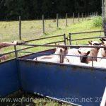 Snapshots of Farm Life