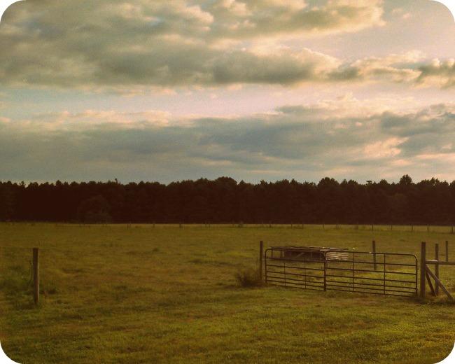 farm life 4