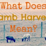 """What Does """"Lamb Harvest"""" Mean?"""