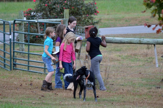 The girls (and Penny, of course) were allowed to walk the entire fence perimeter on their hunt. They had things to collect and things just to mark off as seen.